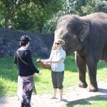 2012.03.12 auckland zoo 1